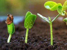 UK_advice-gardening-seeds-cuttings-guide-germinating-seeds_header